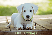 10 Unlimited Thing You Should know About CBD Oil For Dog