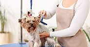 What Is The Secrets Of Excellent Pet Grooming?