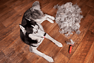 Lifestyle And Grooming Tips To Minimize Dog Shedding - Mom Bloggers Club