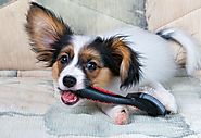 Guide to Buying and Using Dog Hair brush