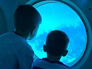 Dive in with a Submarine Tour of Fascinating Marine Life in the Cayman Islands