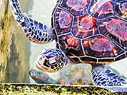 Visit the Sea Turtle Hatchery