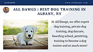 Best Dog Training in Albany, NY