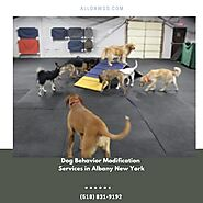 Dog Behavior Modification Services in Albany New York