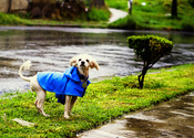 Best Dog Raincoats Reviews - Find only the best for your dog
