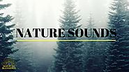 Meditation Music : Deep Forest nature sound (Pure Relaxation)