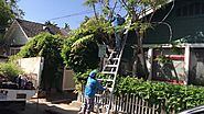 Tree Pruning Services in Santa Barbara.CA