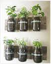 Grow Herbs Indoors This Winter
