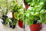 How To Make a One Pot Indoor Herb Garden