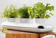 Kitchen Herb Gardens: Best Indoor Herb Growing Kits