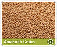 Amaranth Seed Exporters, Manufacturers & Suppliers from India