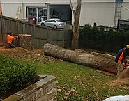 Remove Stumps quickly and easily through Stump Removal Service