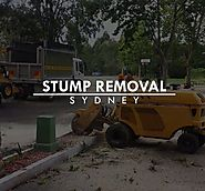 Why you need Stump Removal Sydney