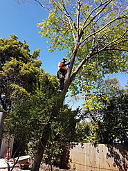 Why You Need Tree Cutting Service in Your Area