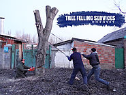 Tree Felling Services Hornsby Safe and Cost – Effective