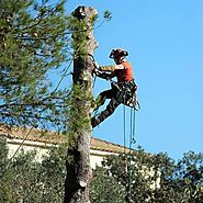 The Tree Lopping Service Hornsby
