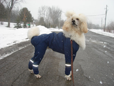 Best Raincoats for Large Dogs 2014