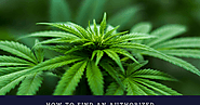 How To Find An Authorized Marijuana Dispensary?
