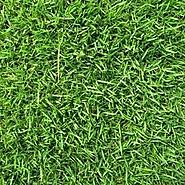 Best Lawn Fertilizer for Zoysia Grass