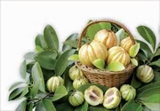 GNC Garcinia Cambogia Review: Is This Safe?
