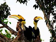 Langkawi Bird Watching Tour
