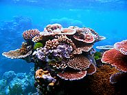 Top Great Barrier Reef Day Tours & Cruises From Cairns | Best Deals & Offers