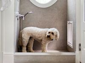 DESIGNING FOR PETS on PINTEREST