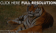Best Wildlife Locations in India