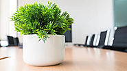 Personalise your space, bring in a photo or a small pot plant