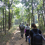 Experience Walking in Jungles of Satpura with Forsyth Lodge | Visual.ly