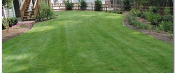 Headline for Best Zoysia Grass Fertilizer for a Beautiful Green Lawn - 2014 Review