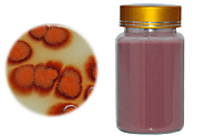 Red Yeast Rice Powder: Beneficial for Lowering Cholesterol