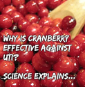 Why is Cranberry Effective Against UTI?