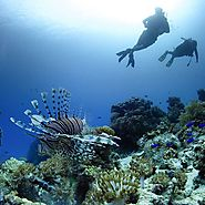 What to Do If You Plan for Diving in Komodo - Aingoshop