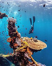 What Set Tulamben Apart from Other Bali Diving Sites | Pcattendancesystem