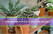 Pack Plants for Moving Pack Plants for Moving... - My MooversPack Plants for Moving Tips | Best House Relocation Serv...