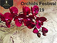 Orchids Festival 2019 at Kew Gardens in London