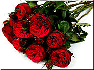 How To Send Red Roses In Kolkata | Shopping 2033