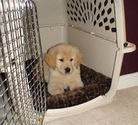 Amazon Best Sellers: Best Dog Crates & Kennels