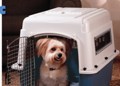 Best Dog Crates|Kennels Review 2014