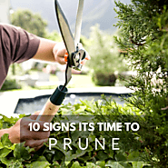 10 Signs it's Time to Trim or Prune Your Trees - Lineage Tree Care