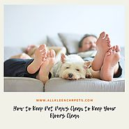 How to Keep Pet Paws Clean to Keep Your Floors Clean - All Kleen Carpet Cleaning