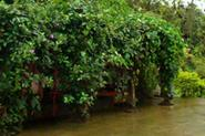 Homestay in Chikmagalur, Home Stays at Chikmagalur, Guest House in Chikmagalur, Holiday Home