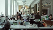 Catvertising - YouTube