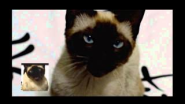 Game of Thrones opening sung by a cat - YouTube