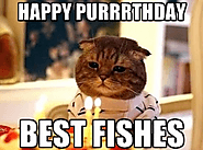 Happy Birthday Cat Meme - Funny Happy Birthday Meme