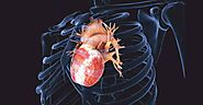 Tissue Engineering For Heart Repair | Insights Care