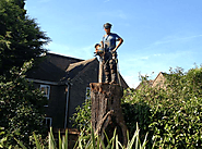Why should you hire a professional tree cutting services in Bromley?