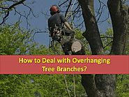 How to deal with overhanging tree branches?