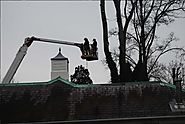 Know the reasons to hire a professional tree surgeon and garden services in Bromley